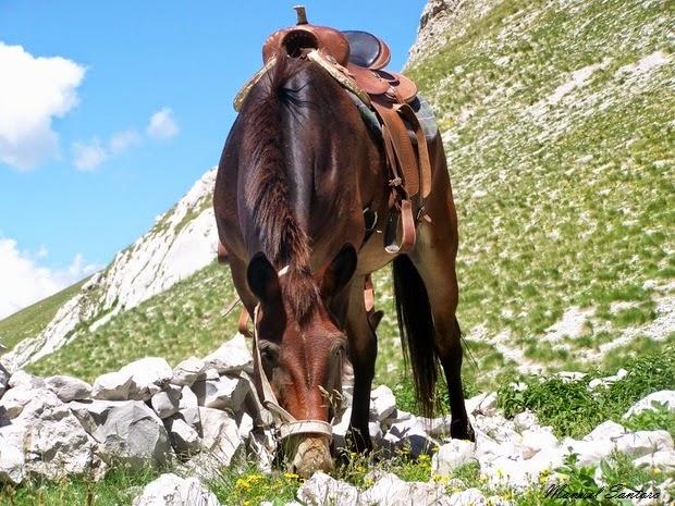 Lago di Pilato, cavallo al pascolo
