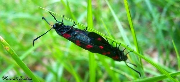 Valle dell'Orfento, farfalle in posizione osè