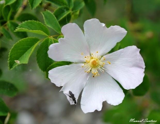 Gole del Salinello, flora e fauna