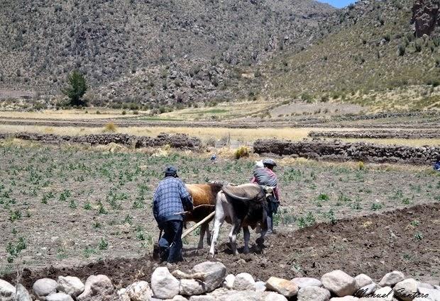 Raggiungendo il Colca Canyon, contadini al lavoro