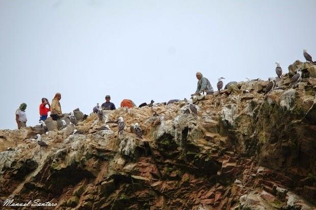 Reserva Nacional de Paracas, Islas Ballestas, raccoglitori di guano