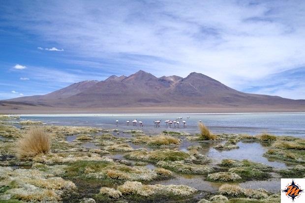 Laguna Cañapa