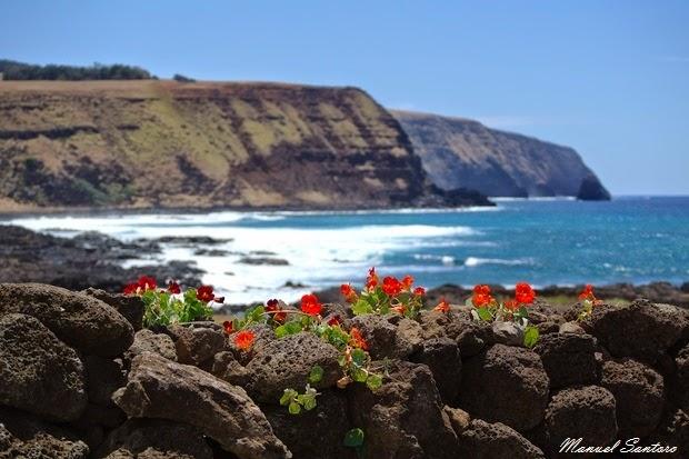 Isola di Pasqua, nei dintorni dell'Ahu Tongariki