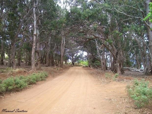 Isola di Pasqua, salendo verso Orongo