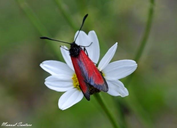 Scendendo dal Monte Porrara, flora