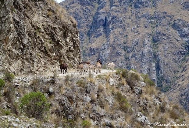 A piedi verso Huancaya, incontri