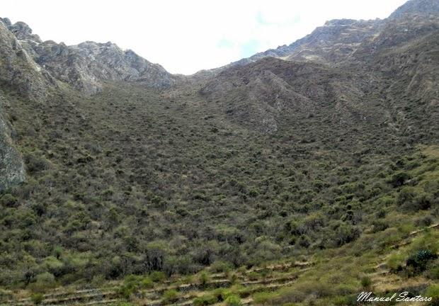 Bosque de Lloclla