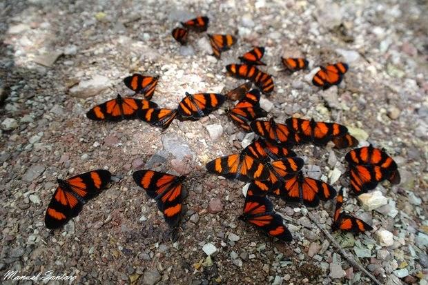 Catarata El Tigre, farfalle