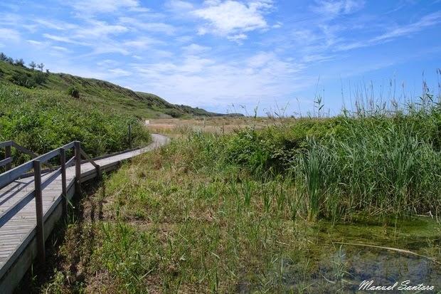 Vasto, Punta Penna. sentiero verso Punta Aderci