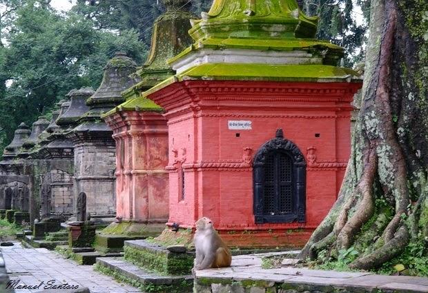 Pashupatinath, scimmia