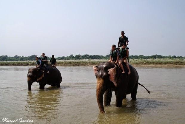 Sauraha, lavaggio degli elefanti nel fiume Rapti
