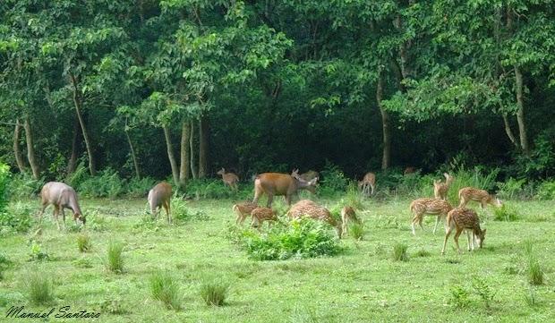Parco Nazionale del Chitwan, fauna