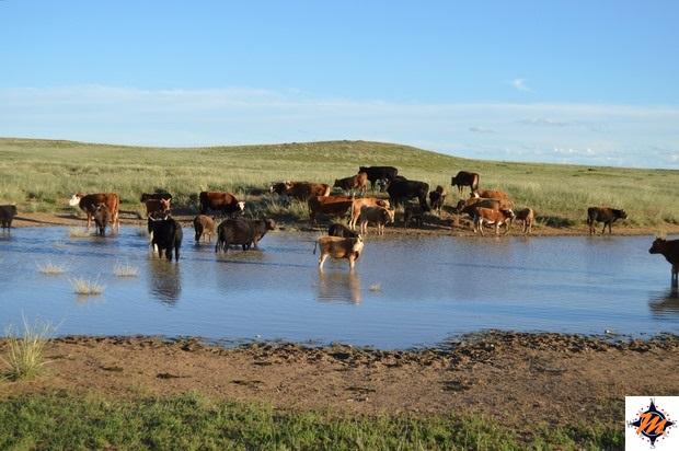 Tornando verso l'Erdene Ukhaa Tourist Camp
