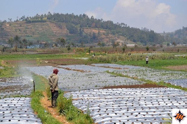 Dieng Plateau, l'altopiano nei pressi del complesso di Arjuna