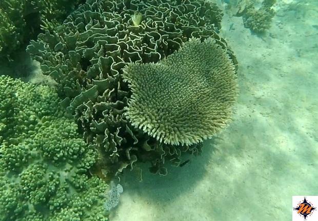 Kanawa, snorkeling