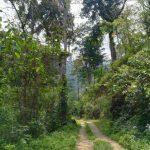 Trekking nello stato di Carabobo: il Cerro Los Aguacates