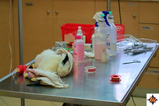 Parco Nazionale dell'Axios Delta, ambulatorio veterinario