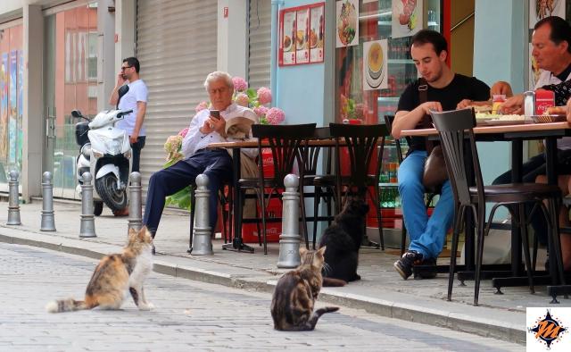 Istanbul, gatti in attesa di cibo