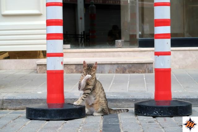 I gatti di Istanbul