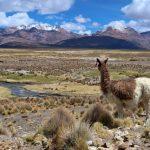 Un itinerario di due settimane per un tour in Bolivia