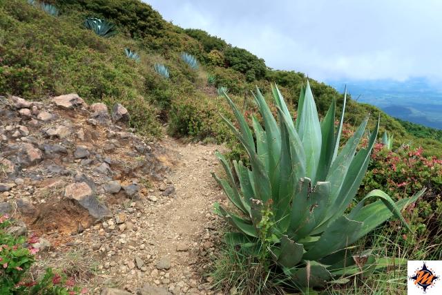 Lungo il sentiero per il vulcano Santa Ana