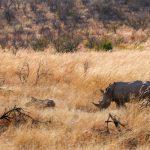 Sudafrica. Il Pilanesberg National Park