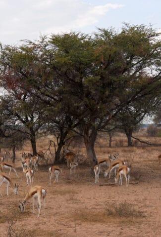 impala-khama-rhino