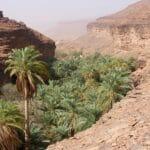 3 oasi della Mauritania da non perdere