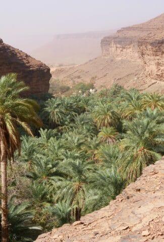 oasi-della-mauritania-terjit